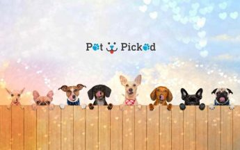 Pet Picked Review | Get Your Pets Favourite Food