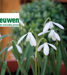 Van Meuwen Review | Get The Best Quality Plants And Bulbs